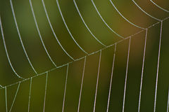 Droplets on a Web Stock Images