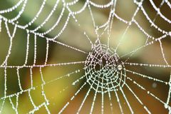 A spiders web Royalty Free Stock Images