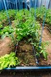 Droppandeirigationsystem Royaltyfri Fotografi