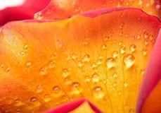 Droppar av dagg på en blomma arkivfoton