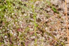 Droppar av dagg på ett gräs Royaltyfri Foto