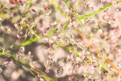 Droppar av dagg på ett gräs Royaltyfria Foton