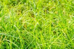 Droppar av dagg på ett grönt gräs royaltyfri bild