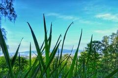 Droppar av dagg på gräset en morgon royaltyfri bild