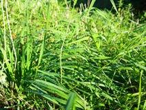 Droppar av dagg på gräset Solkatt i en daggdroppe täta daggliten droppe gräs perfekt övre vatten för leafmorgonen Royaltyfria Foton