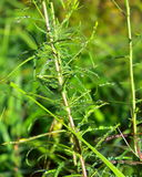 Droppar av dagg på gräset Solkatt i en daggdroppe täta daggliten droppe gräs perfekt övre vatten för leafmorgonen Arkivfoton