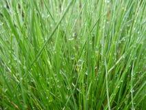 Droppar av regn på gräset royaltyfria foton