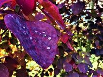 Droppar av regn på sidor arkivfoton