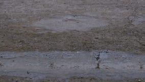 Droppar av regnnedgången till trottoaren som bildar en pöl Tid schackningsperiod stock video