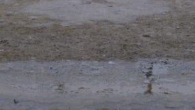 Droppar av regnnedgången till trottoaren som bildar en pöl Tid schackningsperiod lager videofilmer