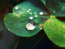 Droppar av vatten över ett blad royaltyfria bilder