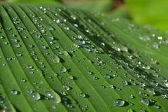 Droppar av vatten Arkivfoton