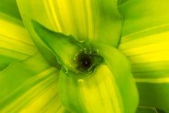 Droppar av vatten på en grön filial Arkivbilder