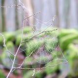 Droppar av vatten på en rengöringsduk för spindel` s royaltyfria foton