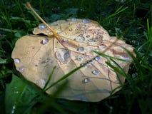 Droppar av vatten på ett blad Arkivfoto