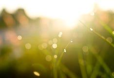 Droppar av vatten på gräs tippar på morgon royaltyfria bilder
