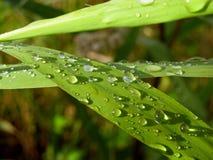 Droppar av vatten på gräset efter regn Arkivbild
