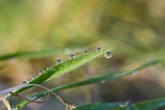 Droppar av vatten på grässtammarna Arkivbild