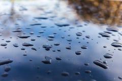 Droppar av vatten på svart bilmålarfärg royaltyfria bilder