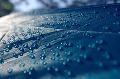 Droppar av vatten på taket av tältet Royaltyfria Bilder
