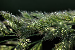droppar Ett blad av en växt Arkivbilder