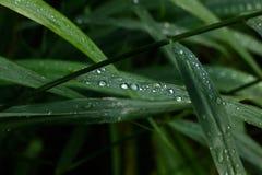 droppar Ett blad av en växt Royaltyfri Foto