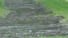 Droppar för hällregnvatten som faller på den trädgårds- stenbanan och plaskar i regnig dag 4K stock video