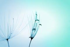 Droppar för vatten för frö för makrofotoväxt Arkivbild