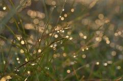Droppar och ljus på gräsmakro fotografering för bildbyråer