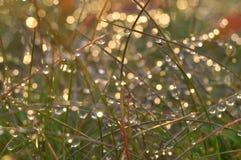 Droppar och ljus på gräsmakro royaltyfria foton