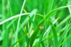 Droppar och Snail Arkivfoto