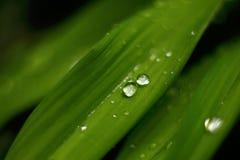Droppar på bladmakro mot bakgrund field bl?a oklarheter f?r gr?n vitt wispy natursky f?r gr?s arkivbild