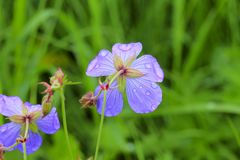 Droppar på blomma 2 Arkivfoton