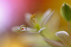 Droppar på den blom- bakgrundscloseupen Stillsamt abstrakt closeupkonstfotografi Tryck för tapet Blom- fantasidesign Arkivbilder