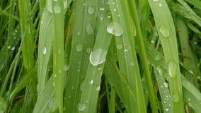 Droppar på raden efter regnet 001 Arkivfoton