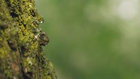 Droppar på trädet stock video