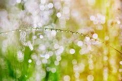 Droppar på växterna efter regn Morgonljus och härlig boke Royaltyfria Foton