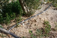 Droppbevattningsystem royaltyfri bild