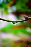 droppe Royaltyfri Foto