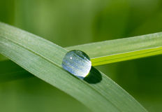 Droppe av dagg på grässtrået Arkivbilder