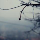 Droppe av regn arkivfoton