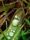 droppe av regn i gräs Arkivfoto