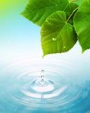 Droppe av vatten från bladet Arkivbild