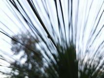 Droppe av vatten omkring som faller från träd Arkivfoto