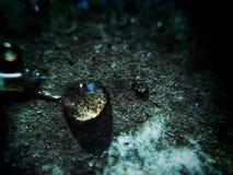 Droppe av vatten på smuts Royaltyfri Bild