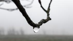 Droppe av vatten som hänger på en filial arkivbild