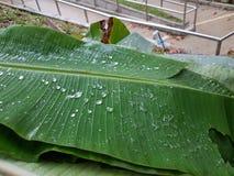 droppe fryst vatten Royaltyfri Fotografi
