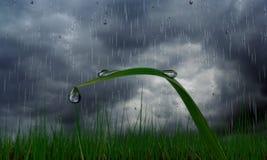 droppe gräs regn Fotografering för Bildbyråer