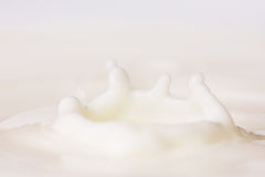 droppe mjölkar arkivfoton