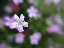 Droppe på blomman Royaltyfri Bild
